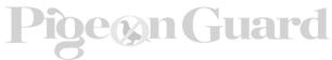 logo-pigeon-1